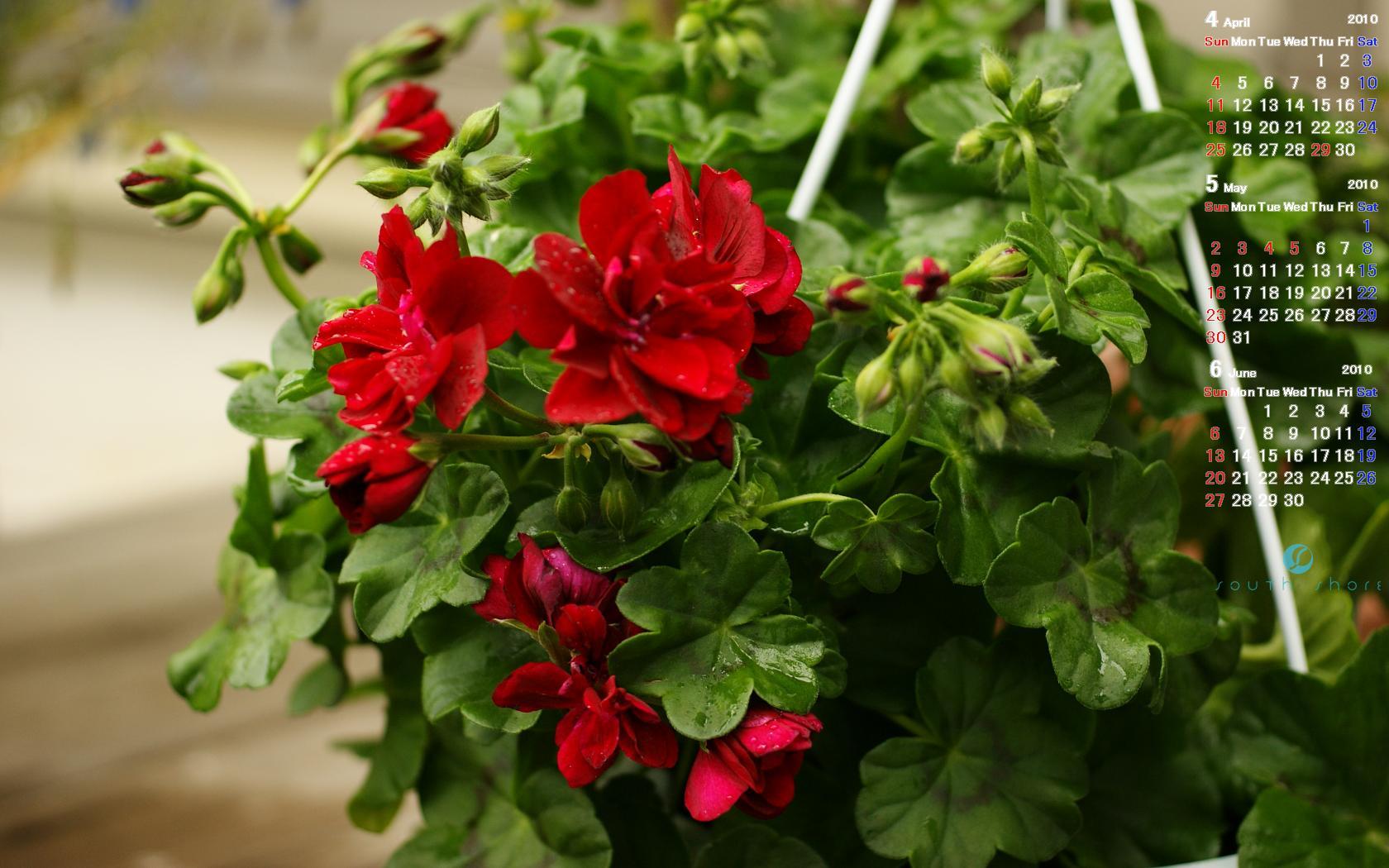 ウェルカムボードやリングピロー ガラス彫刻とお花の店サウスショア 3ヶ月カレンダー ivy